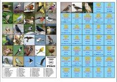 Ptáci (tábornické pexeso)